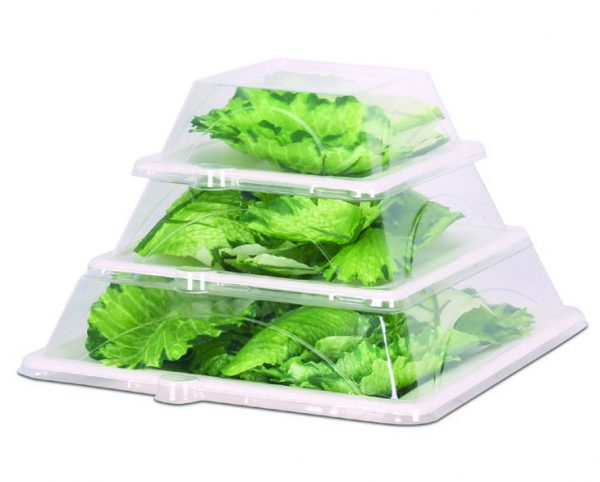 square bagasse plates with dome lids stacked